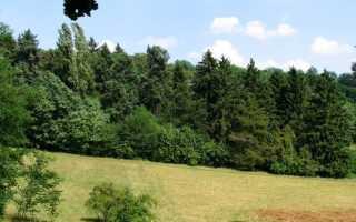 Парк в селе Редю-Маре