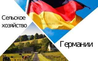 Сельское хозяйство Германии: отрасли, специализация и работа
