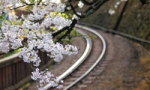 Обычные и скоростные поезда Японии
