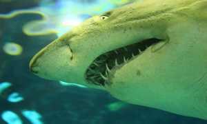 Акулы в Таиланде: опасные пляжи и защита от нападений