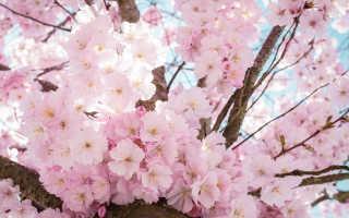 Цветущая Япония